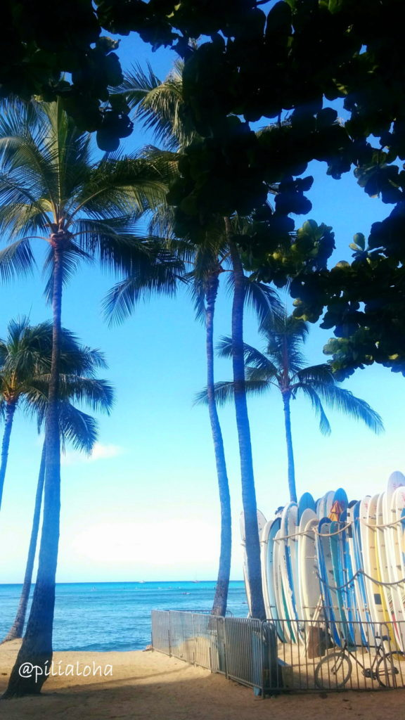 free iphone wallpaper palm tree and surf boad in Hawaii