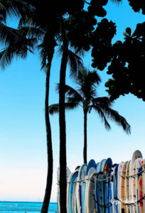 free iphone wallpaper surfboad and palm tree4